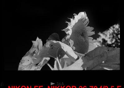 Nikon FE Rollei Retro 400s GIRASOLE 1080
